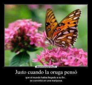400_1193446931_mariposa