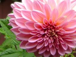 flores13g