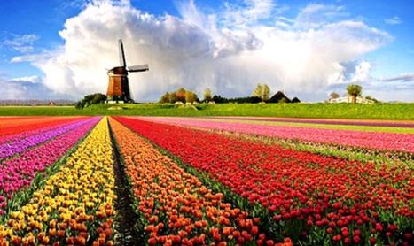 3fffe646b555ad413534fd1f7f252644_tulip-kincir