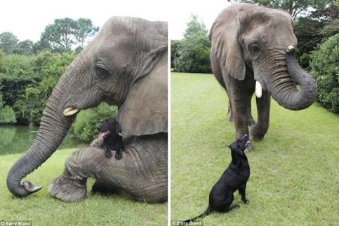 elephant0007